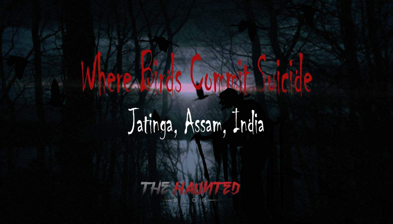 Where Birds Commit Suicide - Jatinga