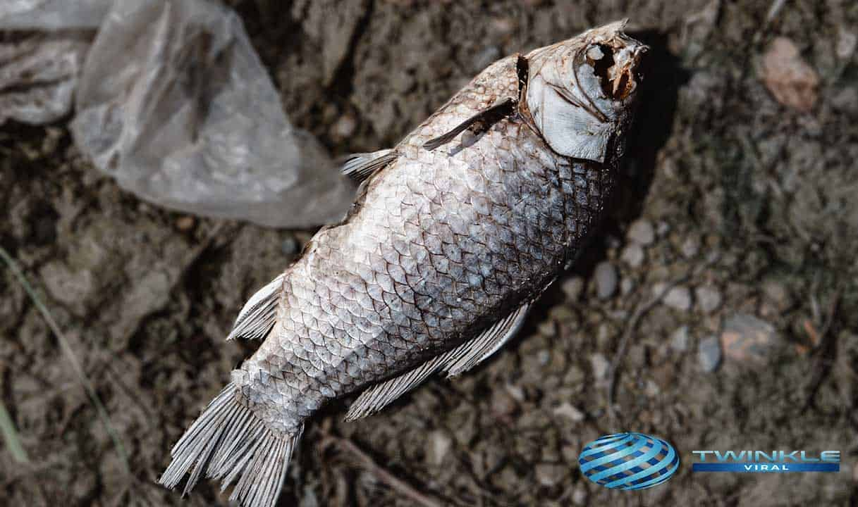 Real-Life Dead Fish Comes Alive Incidents
