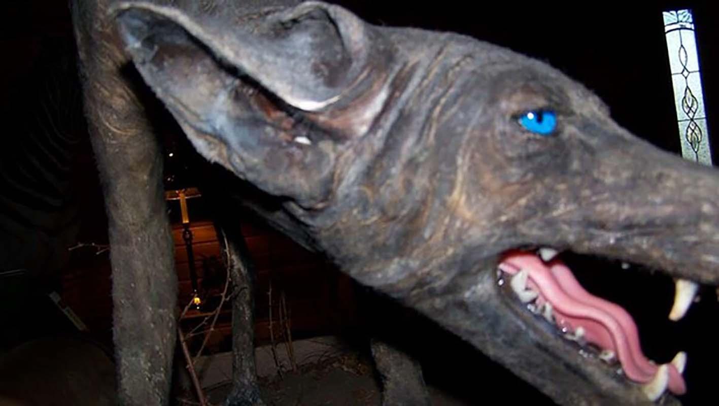 Chupacabra: A Mystery Beast